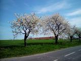 Jaro propuklo naplno. Stromy kvetly během pár dnů úplně stejně jako tady na křižovatce nad Dobroslavicemi.