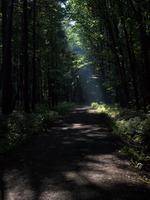 Tajemný les a po chvíli i hrad F-M:-)